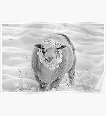 Winter Woolie Poster