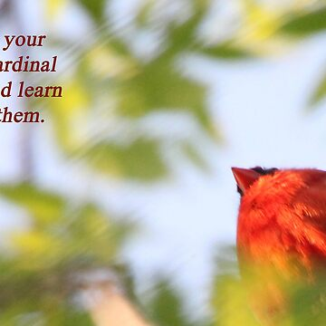 Make your own Cardinal rules and learn from them. by ThomasMurphy