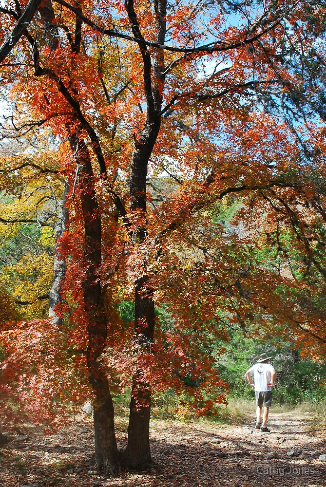 Lost Maples  by Cathy Jones
