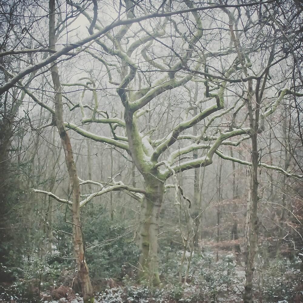 Deep in the woods... by Fiona Jones