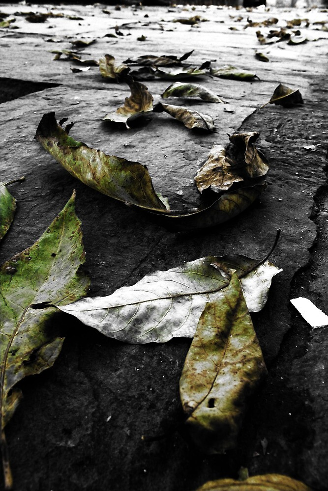 Autumn leaves by Panayotis