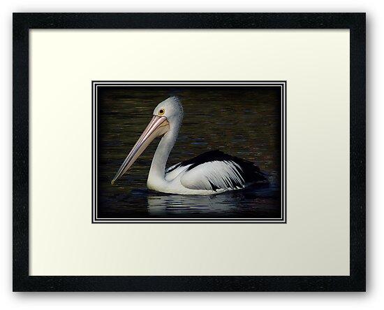 The Pelican! by Susan Freeman