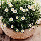spring flowers by Ziva Javersek