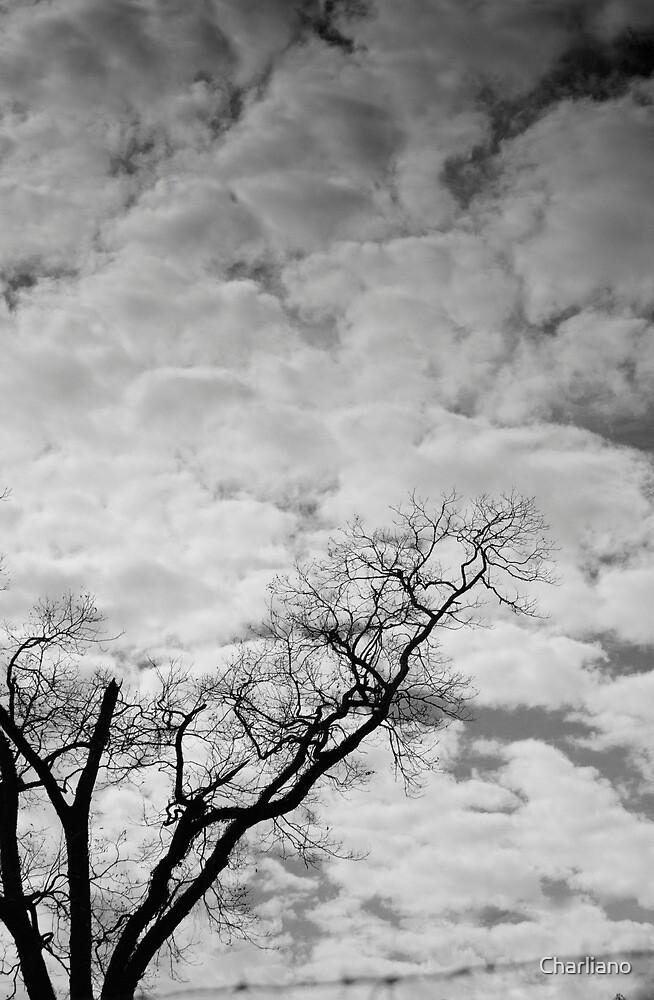 Imagine by Charliano