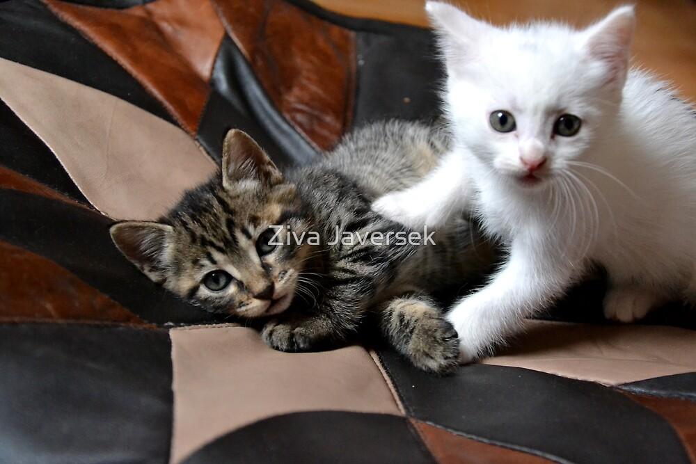 Playing cats by Ziva Javersek