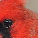 Macro eye by Penny Fawver