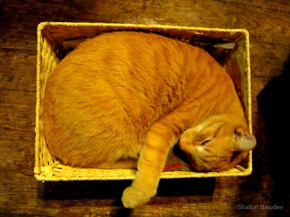 Cat in a Basket by Shallon Bawden