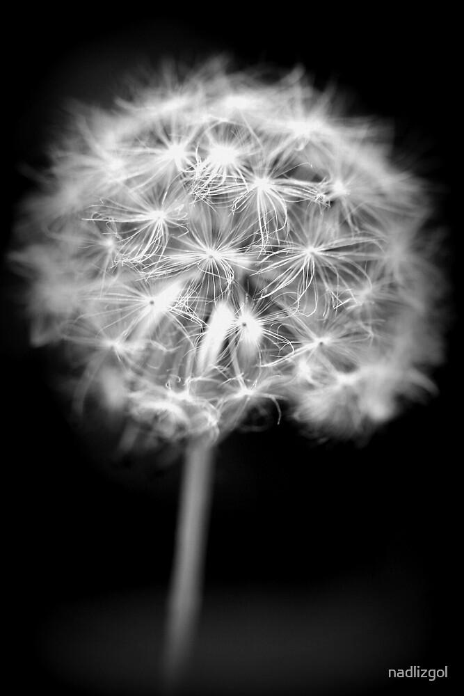 Soft Dandelion by nadlizgol