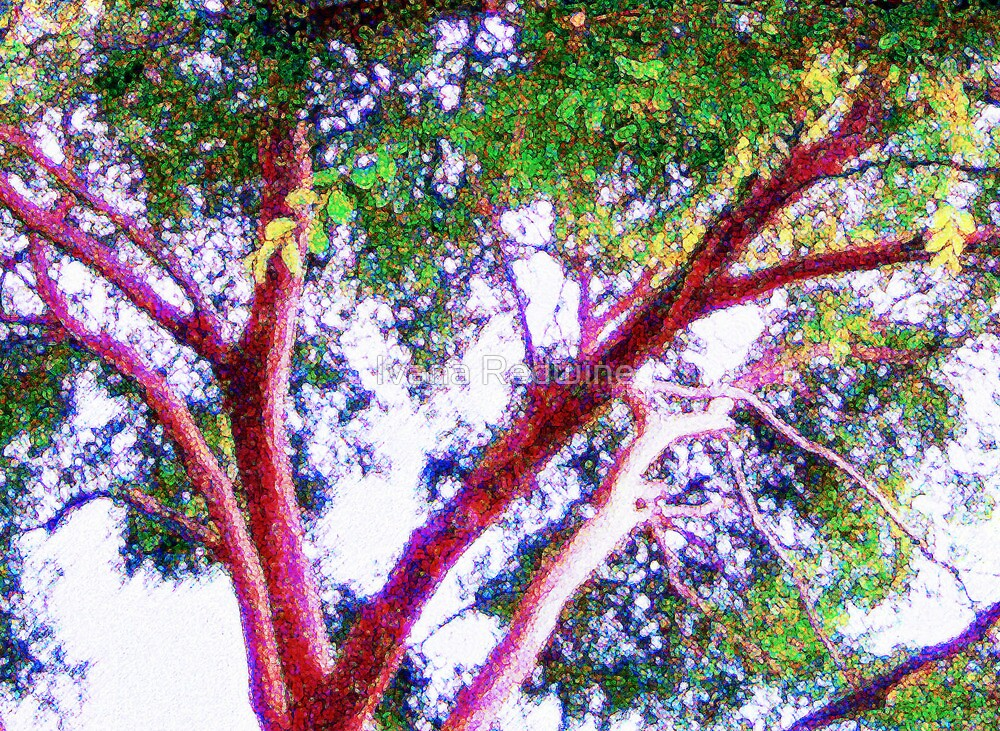 Abstract Composition – Light on Trees and Branches  –  Version Three by Ivana Redwine