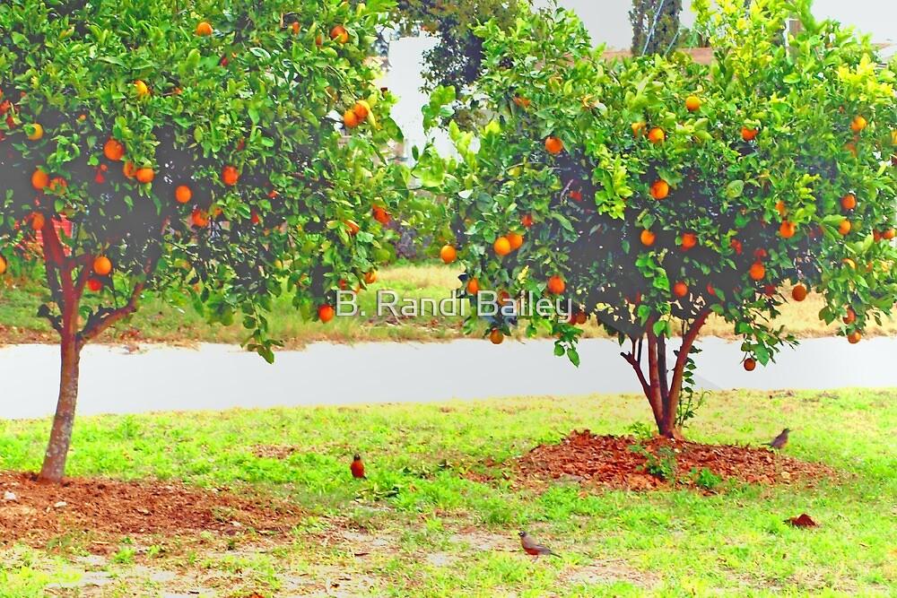 Oranges and robins by ♥⊱ B. Randi Bailey