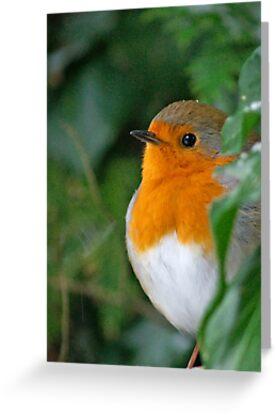 Robin II by wraysburyade