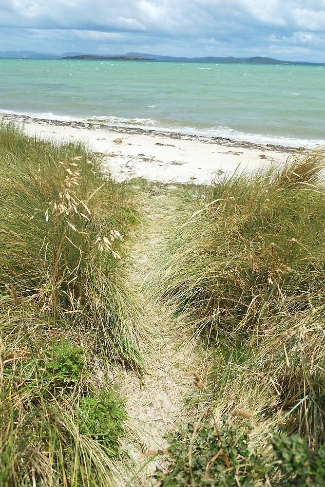 Path to the beach by Meg Blake