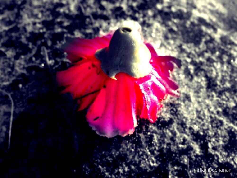 A delicate flower by mrliambuchanan