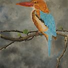 Kingfisher  by NatureLover81