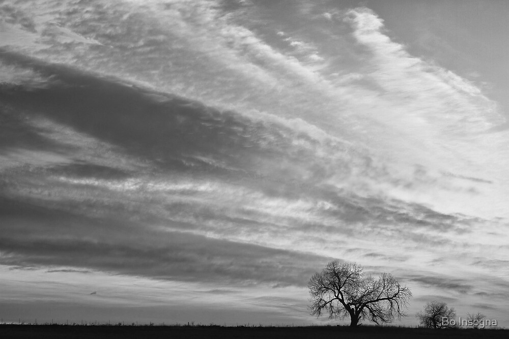 Morning Has Broken Three Trees BW by Bo Insogna
