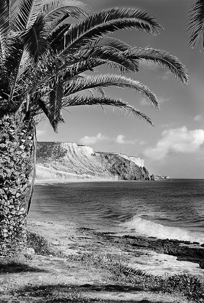 Palm Beach by Paul Pasco