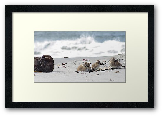 Beach Family by SwampDogPhoto