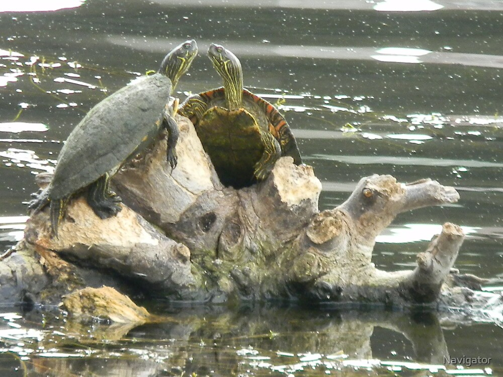 Turtle Talk by Navigator