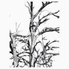 Skeleton Tree by Alastair Creswell
