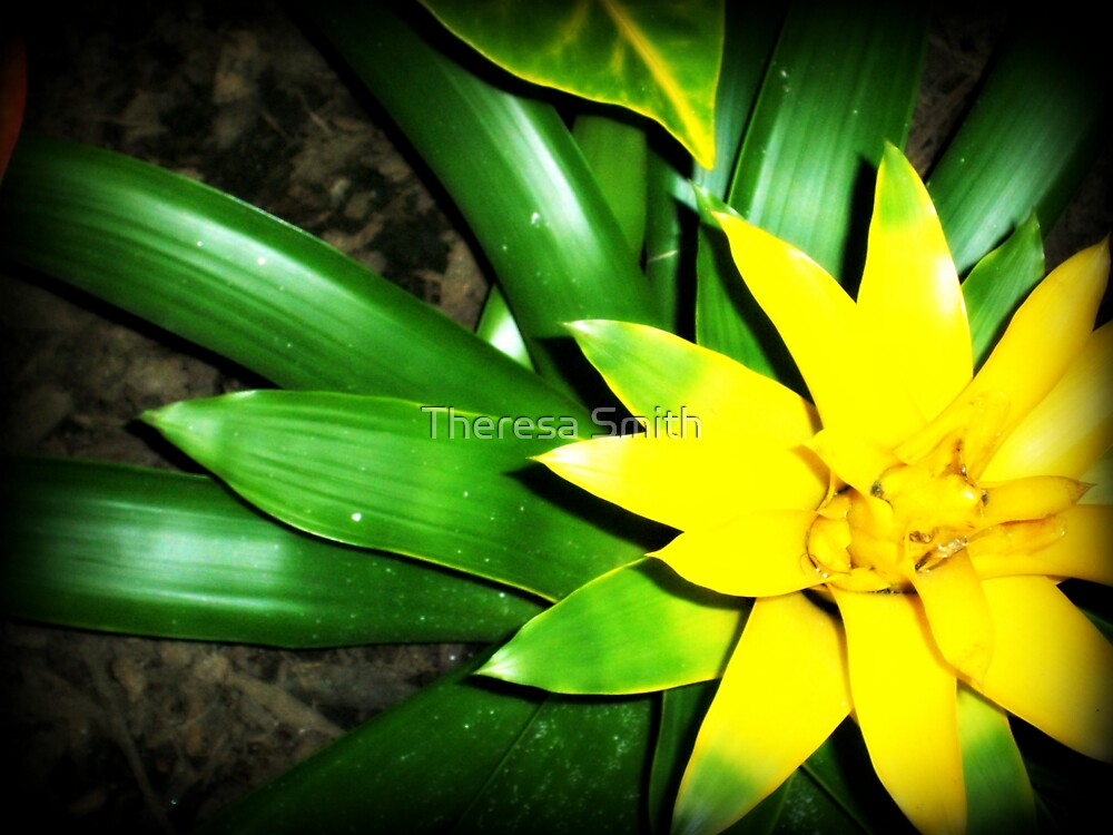 Yellow Flower by Theresa Smith