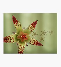 Succulent flower in green Photographic Print