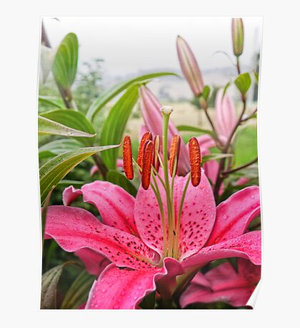 Lovely lady Lilium Poster