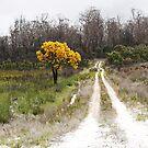 Christmas tree Western Australia by dgugeri