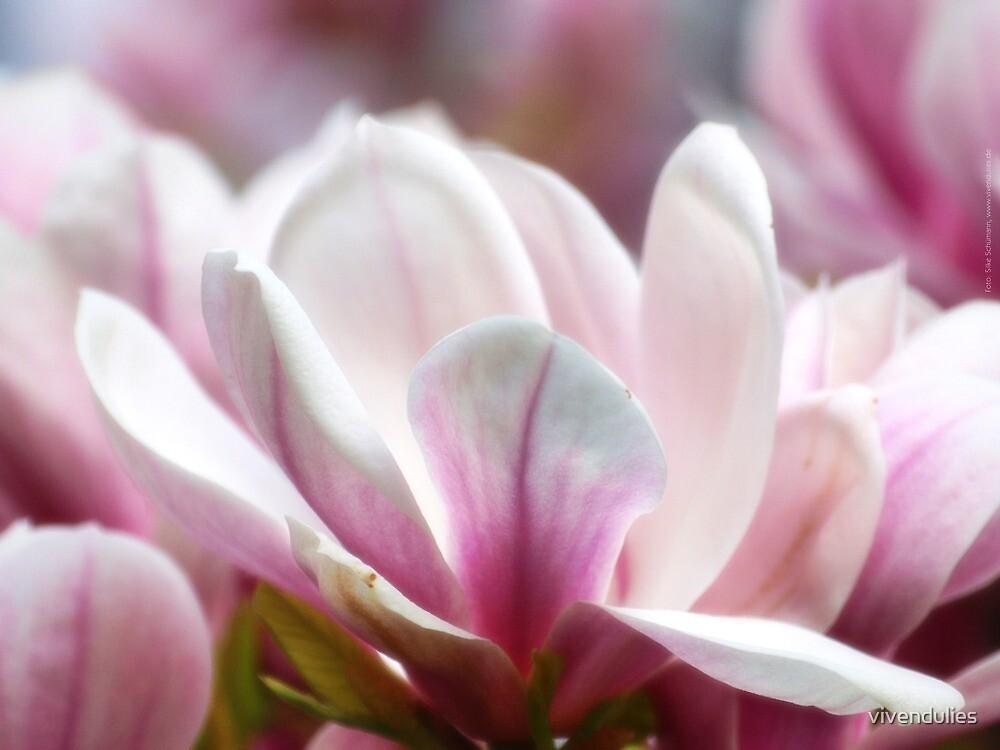 Magnolias VRS2 by vivendulies
