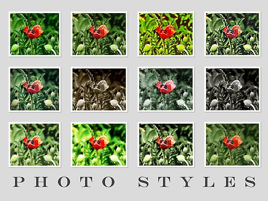Photography - Picture Styles VRS2 by vivendulies