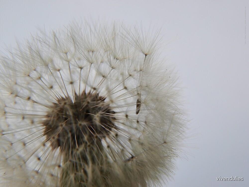 Blowing on Dandelion Seed  VRS2 by vivendulies