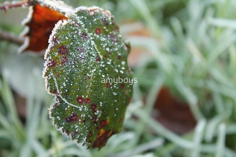 Frosty Leaf by amyboys