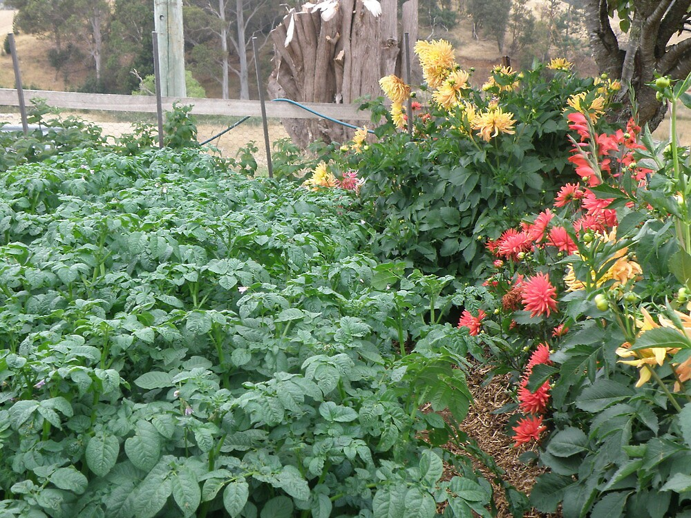 Companion planting by Elaine Game
