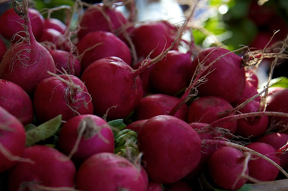 fresh radishes by thvisions