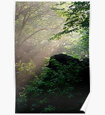 Sunshine Streaming Through The Forest Poster
