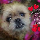 Happy Valentine for Biddy by vigor