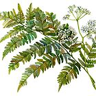 Watercolor fern and flowers by stasia-ch