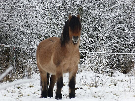 horse in the snow 2 by cmlitchfield