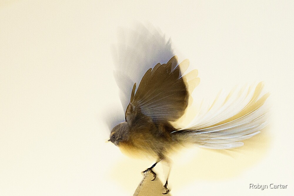 Flight by Robyn Carter