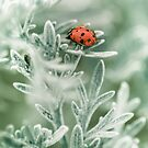 Lady Bug by Armando Martinez