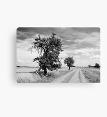 Fruit trees along the road to Borstel Canvas Print