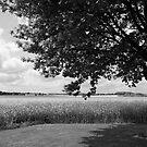 Oak and rapeseed by Harald Walker