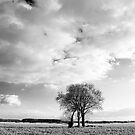 Tree group by Harald Walker