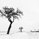 Winter time by Harald Walker