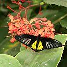 Butterfly Landing by mandamurr81