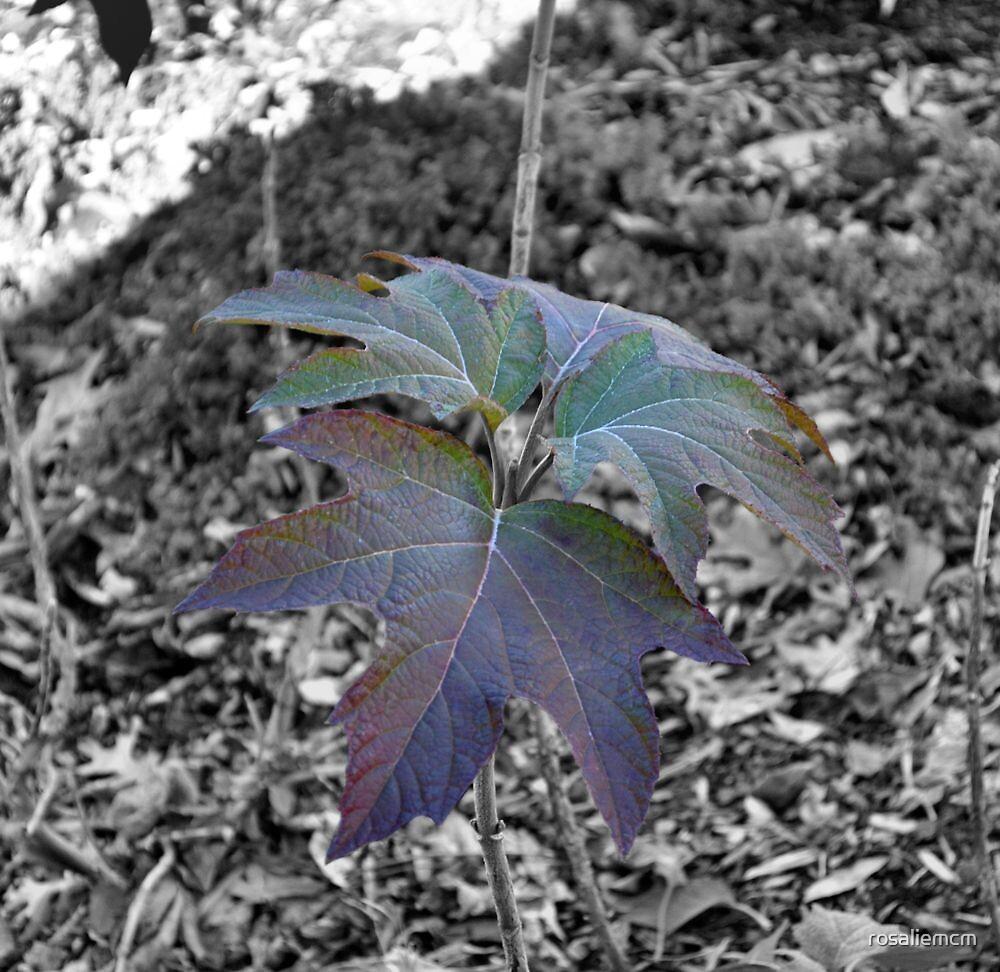 Leaves of Winter by rosaliemcm