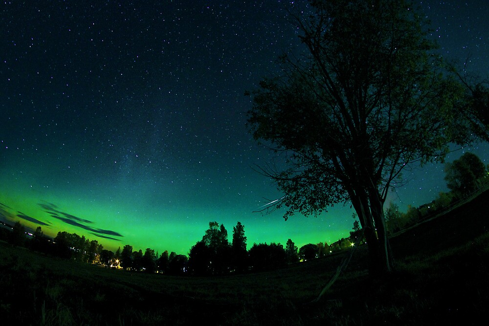 Stargazer by Daniel G.