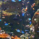 Under the Sea by mandamurr81