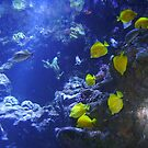 Yellow Fish Cascade  by mandamurr81