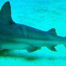 Shark by mandamurr81