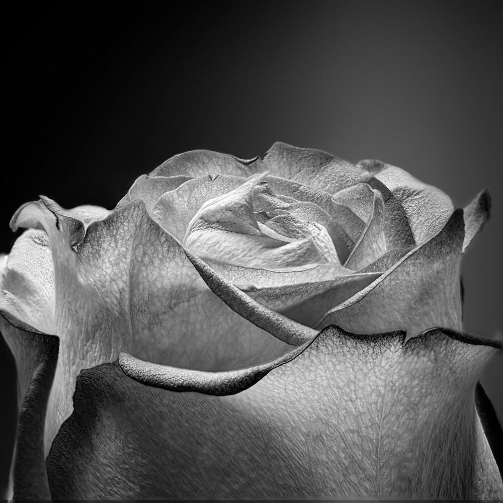 Paper Look Flower (case study 1) by Arkadiy Chernov
